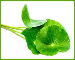 centella-asiatica-extract-1.png