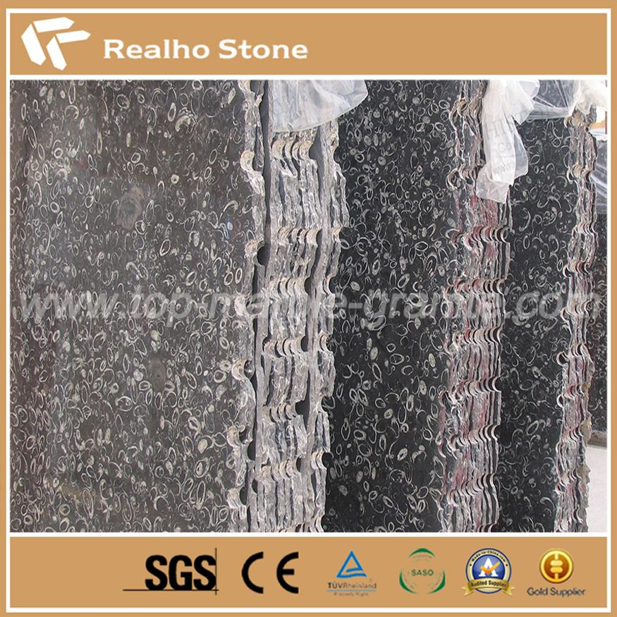 Dream Circle Black Fossil Marble Slabs and Countertops