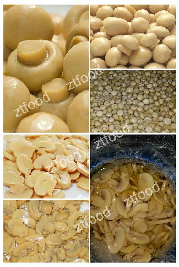 Good price fresh organic canned mushrooms