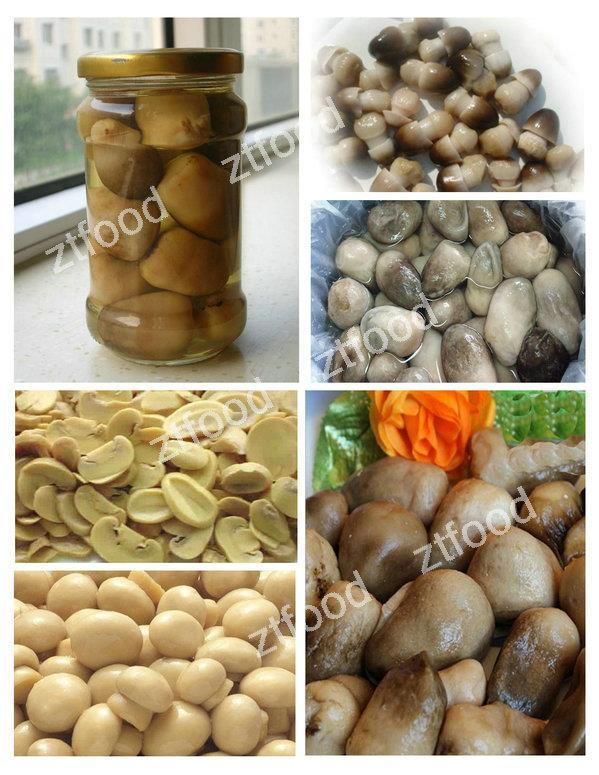 canned straw mushrooms nutrition in good price