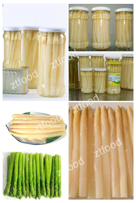 fresh green asparagus canned nutrition in good price