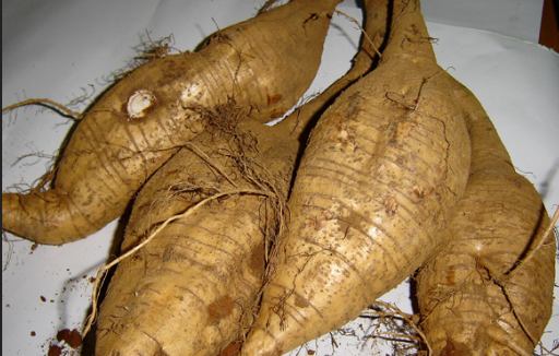 Pueraria Extract.png