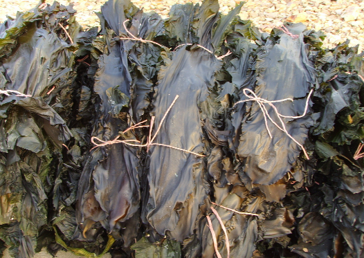 Kelp Extract.png
