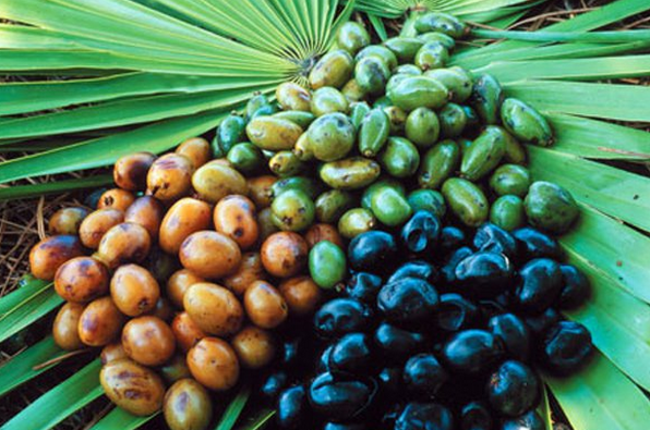 Saw Palmetto Extract.png