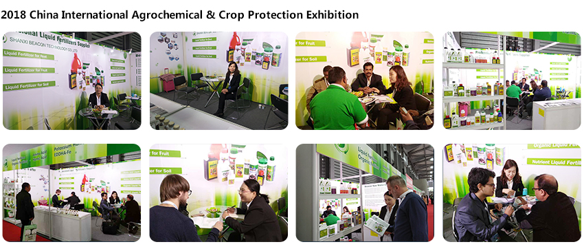 2018 CAC Exhibition.png