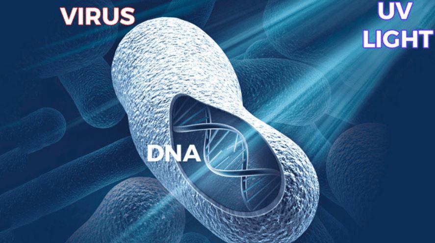 DNA under UVC